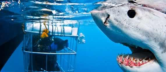 Shark-Cage-Diving-Global-Travel-Alliance-SA-570x247